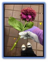 Messages Image(1163073376).jpeg